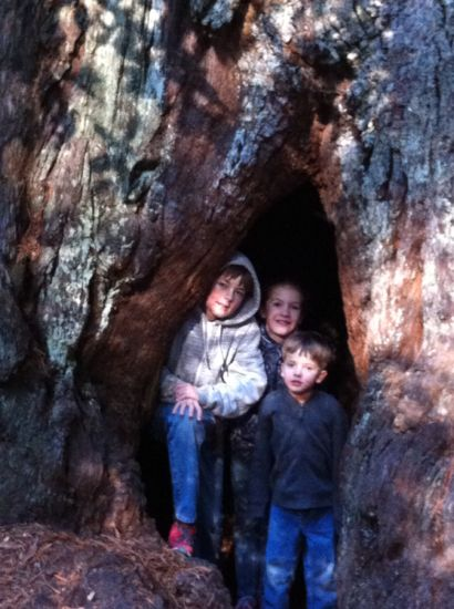 kids in a tree