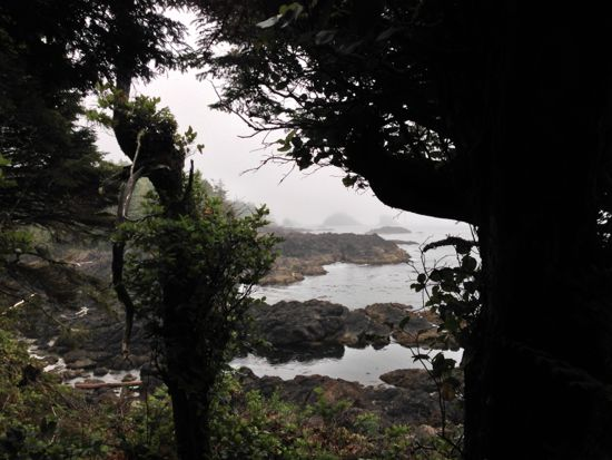 fog and the Wild Pacific Trail