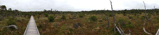 bog trail panorama