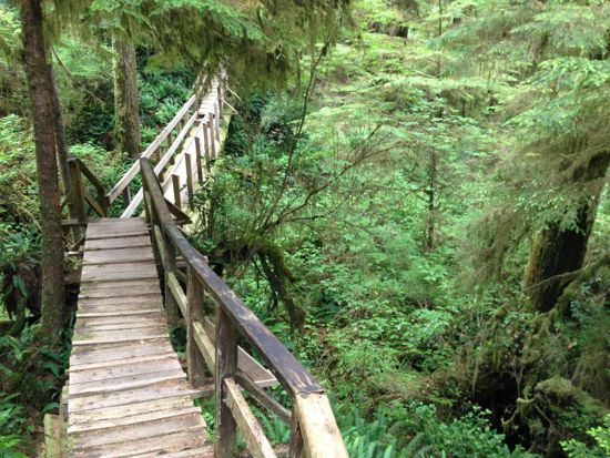 Rainforest Trail, Pacific Rim National Park
