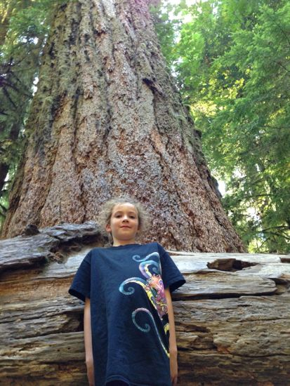 Really tall Douglas Fir