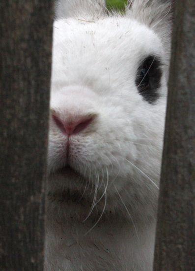a busy bunny