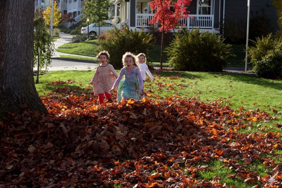 kids and leaves
