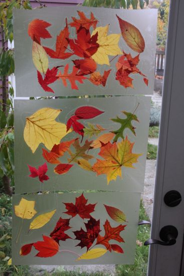 back door leaf collage