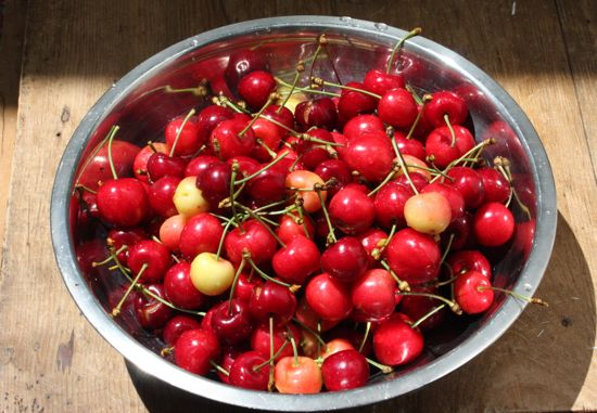 homegrown cherries